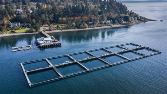 Salmon Advocates Challenge Approval of Washington Net Pen Aquaculture