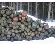 New timber regulation comes into force