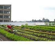 Rooftop farming: The next steps for development