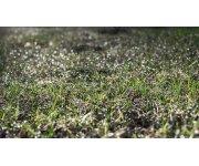 Simple method to estimate soil carbon stocks in grassland