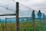 Vineyard Netting
