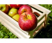 Secrets of Successful Apple Harvesting