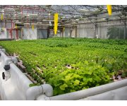 Farming in a Controlled Environment
