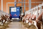 Aramis  - Model II  - Fully Automatic Feed Robot System