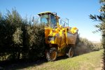 Gregoire - Model G10.330 - Olive Harvesting Machine