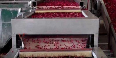 BerryTek & IMPULSE - Cranberry Soft and Color Sorter System