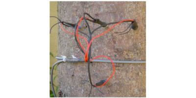 Nach Dr. Liu - Model SF-L TypM  - Sapflow Sensor