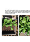 Bio Soil Magic & Seed Up - Mustard Seed Trial Datasheet
