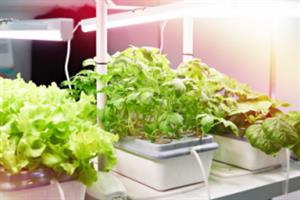 The future of grow light technology
