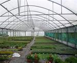 Economic tropic plastic film agricultural greenhouse/invernadero for sale