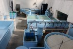 Lobster - Shellfish Hatcheries System