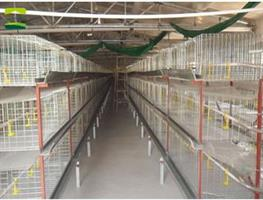 Great Farm - Vertical Broiler Cages