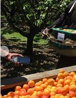 ABCgrower - Orchard Labour Collects And Reports  Software