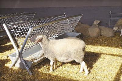 Two-side Feeder for Sheep and Goats