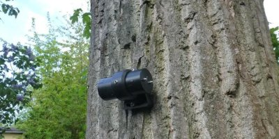 Tree Motion Sensors (TMS)