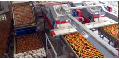 Aweta - Tomatoes Sorting Systems