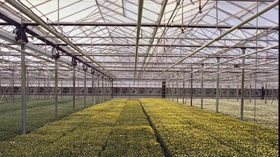Venlo - Glass Greenhouses