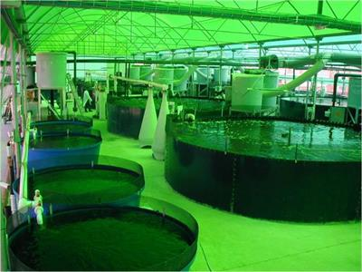 Recirculating Aquaculture System (RAS)