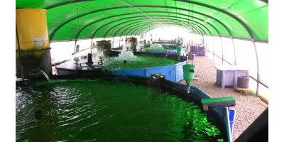 Intensive Shrimp Farming Technology