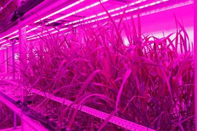 Urban Crop Solutions makes indoor farming technology for Mars biosphere