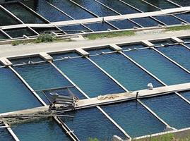Tilapia Fish Farm