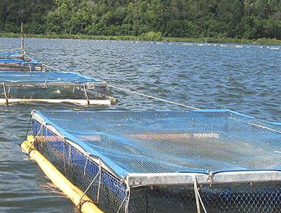 Community Fish Farm