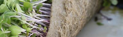 BioStrate - Microgreen Biobased Textile Absorbs and Retains