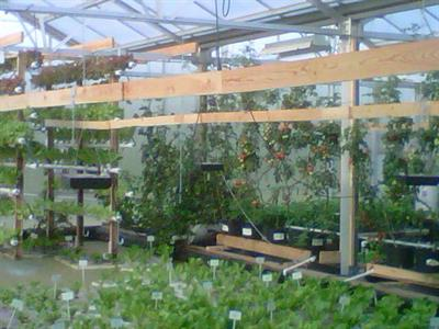 Controlled Environmental Farming Inc - Economic Development for Locally Grown Agricultural Production & Aquaponic Farming