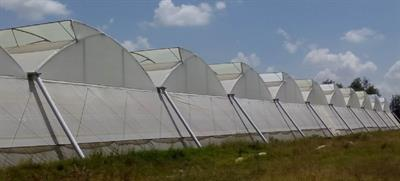 MSC Greenhouses - Model K3 - Greenhouse