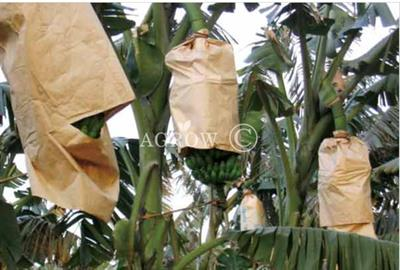 Agrow - Model HGS-TY - Banana Growing Bags