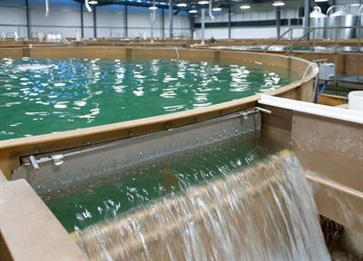 Pranger - Recirculating Aquaculture Systems (RAS)