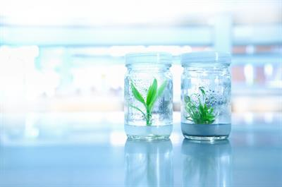 Dalynn - Plant Tissue Culture