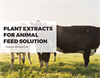 Plant Extracts for Feed Additive Formulation