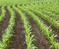 Plant Nutrition with True Solution Starter Fertilizer