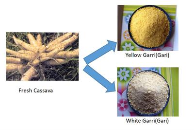 How To Process Garri From Cassava Tubers?