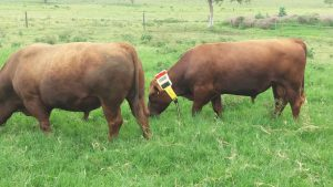 Cattle Watch - GPS and Satellite Cattle Tracking Systems