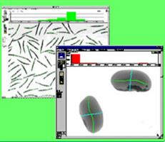 WinSEEDLE - Image Analysis Software